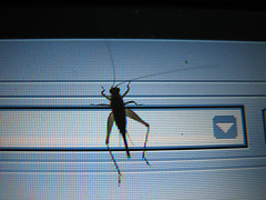 cricket on a screen